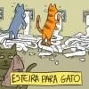 Esteira pra gato!