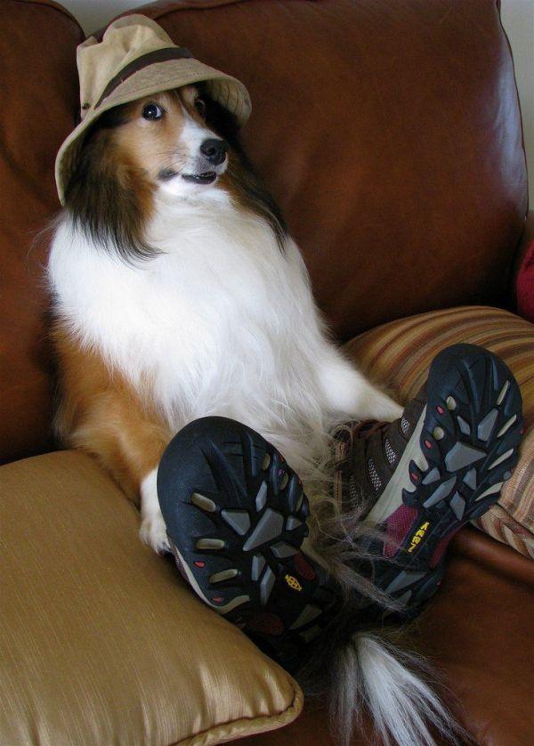Cachorro Moleque