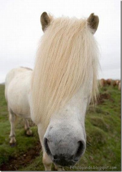 Cavalo Emo