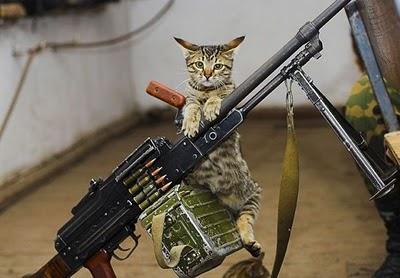 Rambo Cat