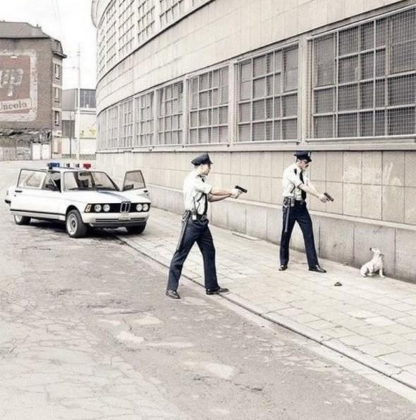 Cachorro Ladrão
