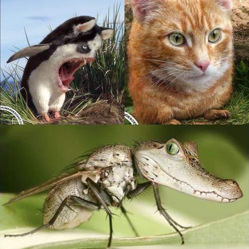 Fabuloso Montagens engraçadas de animais - HUMORBABACA.com LG93