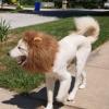 Cão Leão...