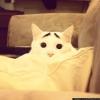 Gato com sobrancelhas...