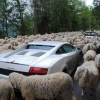 Trânsito intenso...