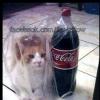 Kit Coca-cola...