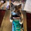 O gato de botas...