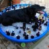 Cão de guarda...