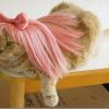 O novo gato da Katy Perry...