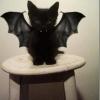 O Gato do Batman