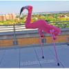 A Melhor Fantasia de um Flamingo!