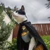 O Batcat!