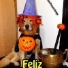 Feliz cãolloween!