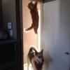 Procurando o gato...