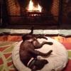 Cachorro-quente