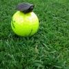 Menor tartaruga do mundo...