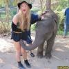 Elefante tarado!