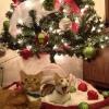 Olha, é Papai Noel!!