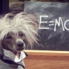 O cachorro do Einstein...