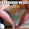 Banho no gato...