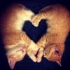 É o amor...