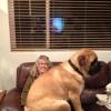 Meu cãozinho de estimação...