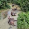 SPA de elefantes...