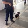 Cão policial, parece assustador...