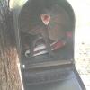 Há espera do correio...