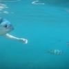 Rel�quia, peixe transparente...