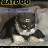 Super Batdog