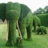 Criatividade no jardim!