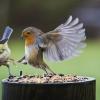 Ufc de passarinho...