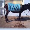 Burro-táxi