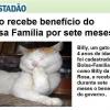 Gato recebe bolsa família...