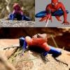 Sapo aranha