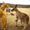 Trollando o canguru...