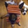 Cão salsicha
