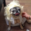 Cadela se casando