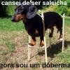 Cachorrinho Zueiro