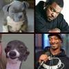 Cachorros e Celebridades Parecidas