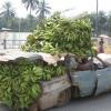 O Carro da bananas