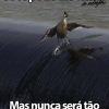 Pato surfista