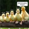 A brincadeira dos Patos