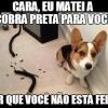 Cachorrinho matou a cobra