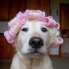 Cachorro fazendo o cabelo
