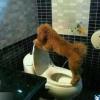 Cachorro bem criado