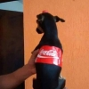 Cachorro Coca Cola