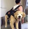 A felicidade do cãozinho