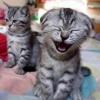 Gato feliz